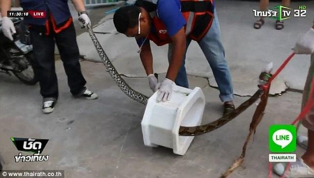 Thái Lan: Hoảng hồn với rắn hổ mang chui lên từ bồn cầu - 3