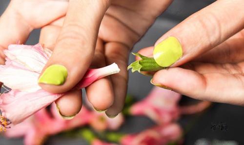 Cách dưỡng tóc mượt như suối từ hoa dâm bụt - 2