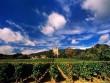 Tỉ phú Jack Ma mua 2 vườn nho Pháp hơn 300 tỉ