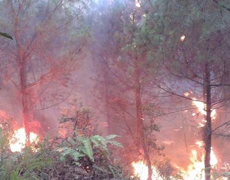 Chữa cháy rừng, bí thư xã gãy tay, cán bộ địa chính ngất xỉu - 1