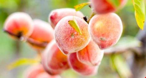 5 loại trái cây tốt nhất cho sức khỏe trong mùa mưa - 1