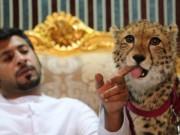 Triệu phú trẻ Ả Rập khoe dàn thú dữ nuôi như chó nhà