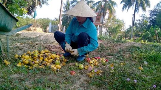 Doanh nghiệp Việt tự triệt nhau - 1