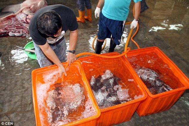 Cứu sống hàng chục cá mập con từ xác cá mẹ - 2