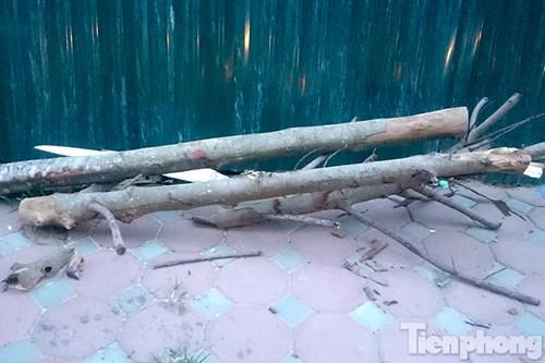Hà Nội: Nhổ bỏ hàng loạt cây xanh chết khô như cột điện - 3