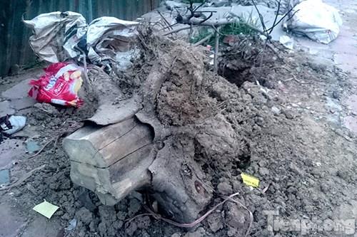 Hà Nội: Nhổ bỏ hàng loạt cây xanh chết khô như cột điện - 5