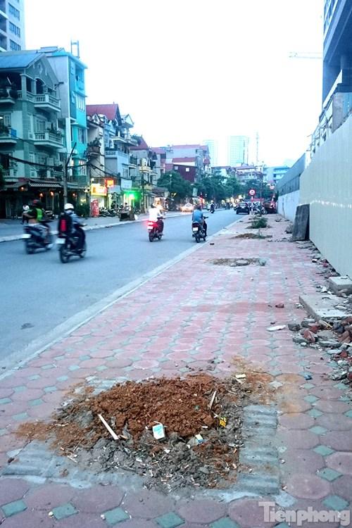 Hà Nội: Nhổ bỏ hàng loạt cây xanh chết khô như cột điện - 6