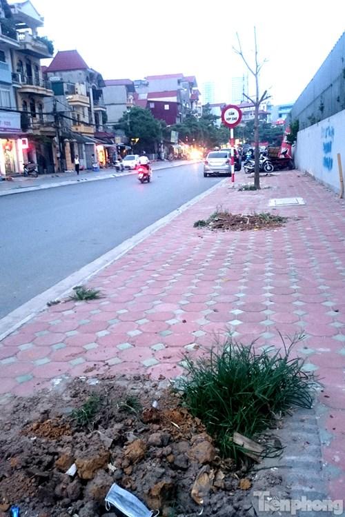 Hà Nội: Nhổ bỏ hàng loạt cây xanh chết khô như cột điện - 7