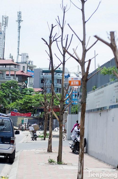 Hà Nội: Nhổ bỏ hàng loạt cây xanh chết khô như cột điện - 9