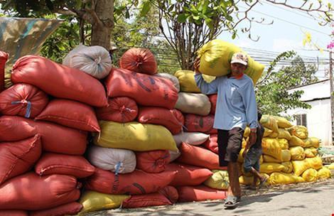 Trung Quốc sang tận ruộng kiểm tra gạo Việt - 1