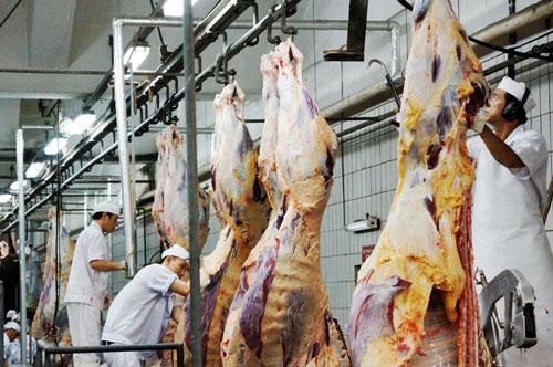 Lo Úc cấm xuất khẩu bò sang Việt Nam - 1