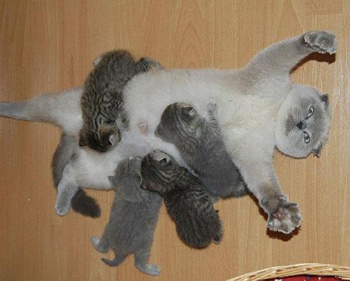 Cười rách mép với tư thế cho con bú của chó mèo - 1