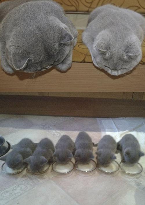 Cười rách mép với tư thế cho con bú của chó mèo - 6