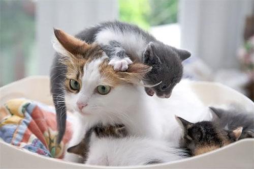 Cười rách mép với tư thế cho con bú của chó mèo - 9