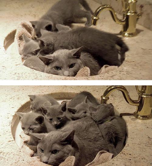 Cười rách mép với tư thế cho con bú của chó mèo - 10