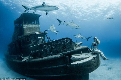 Người đẹp mạo hiểm một mình lặn giữa bầy cá mập - 1
