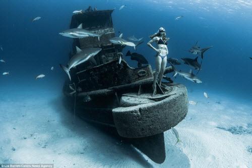 Người đẹp mạo hiểm một mình lặn giữa bầy cá mập - 3