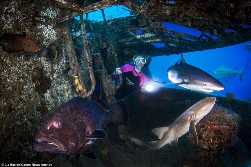 Người đẹp mạo hiểm một mình lặn giữa bầy cá mập - 4