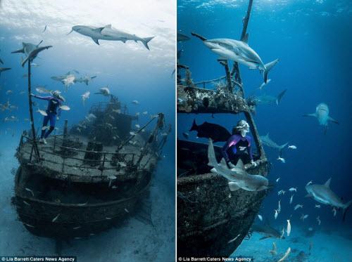 Người đẹp mạo hiểm một mình lặn giữa bầy cá mập - 5
