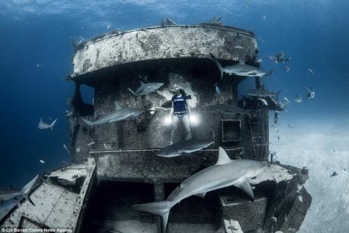 Người đẹp mạo hiểm một mình lặn giữa bầy cá mập - 6