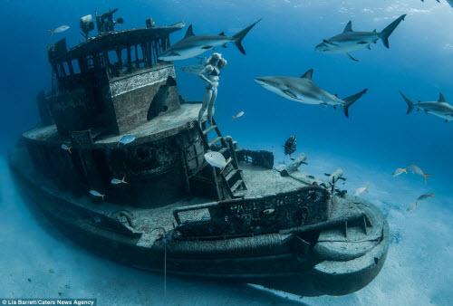 Người đẹp mạo hiểm một mình lặn giữa bầy cá mập - 7