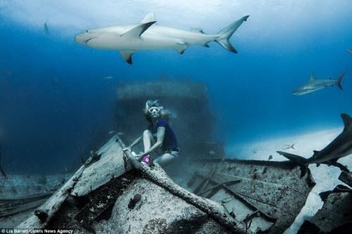 Người đẹp mạo hiểm một mình lặn giữa bầy cá mập - 8