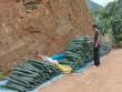 Lạng Sơn: Nông dân lao đao vì bí đao!