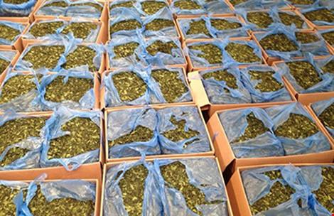 Bộ Công an đề nghị xem 'lá khat' là ma túy - 1