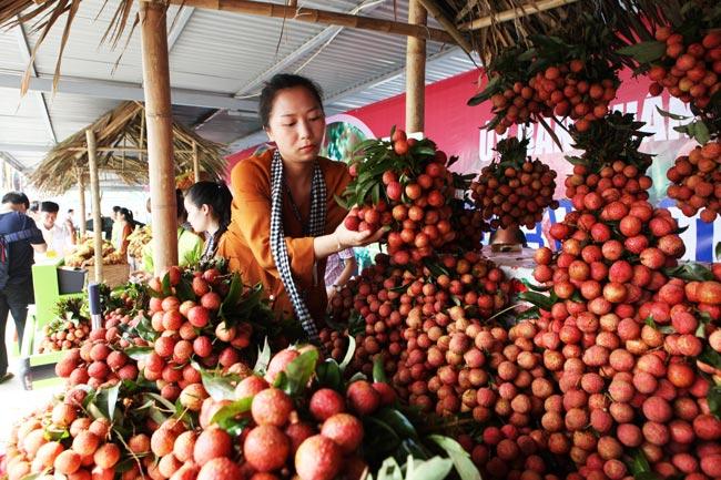 Người Hà Nội đã được ăn vải thiều Bắc Giang chính hiệu - 2