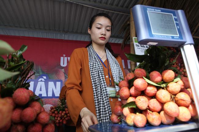 Người Hà Nội đã được ăn vải thiều Bắc Giang chính hiệu - 7