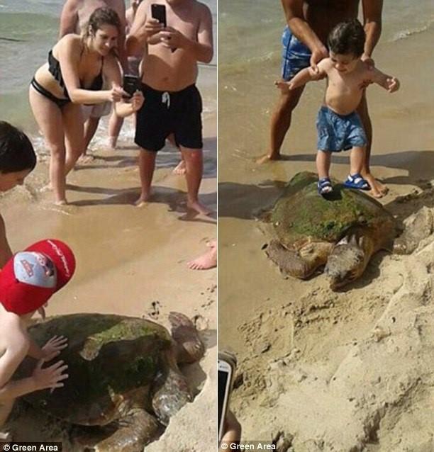 Rùa biển quý hiếm bị du khách lôi lên bờ đánh đập - 2