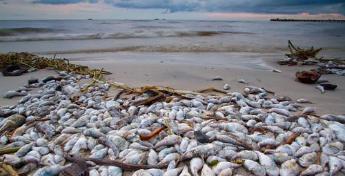 Thủ tướng: Tăng thời gian hỗ trợ ngư dân vùng cá chết - 1