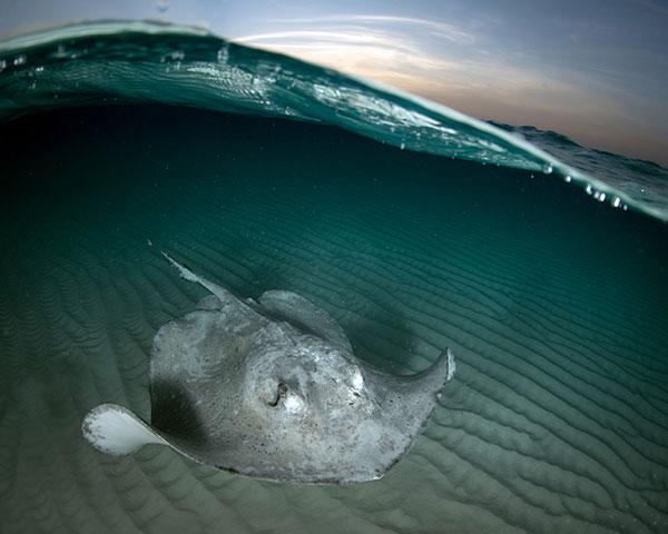 """Nàng tiên cá"""" mạo hiểm bơi lội cùng cá đuối gai độc"""