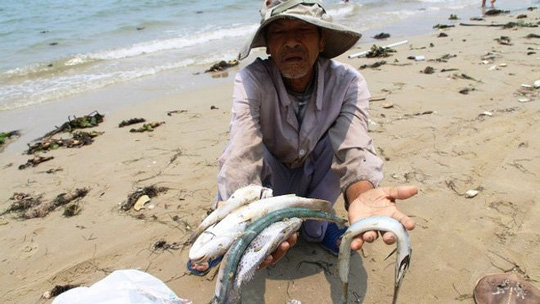 Khả năng 29-6 công bố nguyên nhân cá chết tại Miền Trung - 1