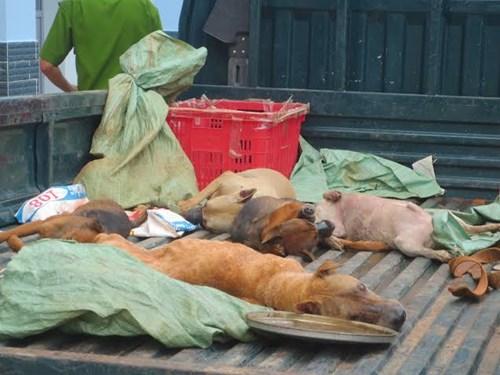 Nghi can trộm chó ở Bà Rịa tử vong do đa chấn thương - 1