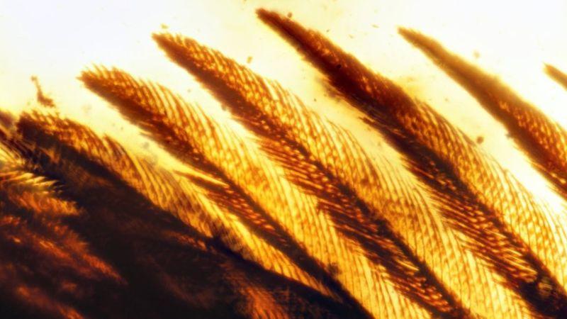 Cánh chim 60 triệu năm trước nguyên vẹn như còn sống - 4