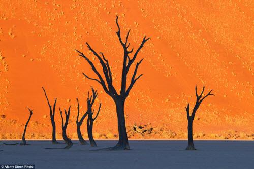 15 bức ảnh thiên nhiên đẹp lạ như... ảnh Photoshop - 4