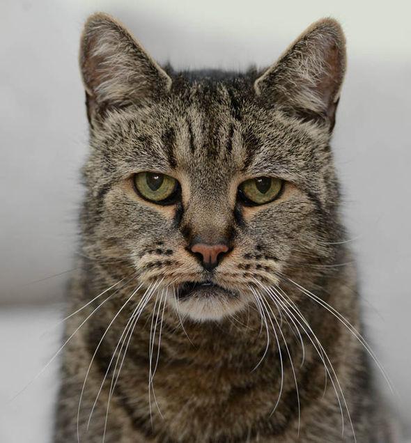 """Cụ mèo già nhất thế giới """"141 tuổi"""" - 2"""