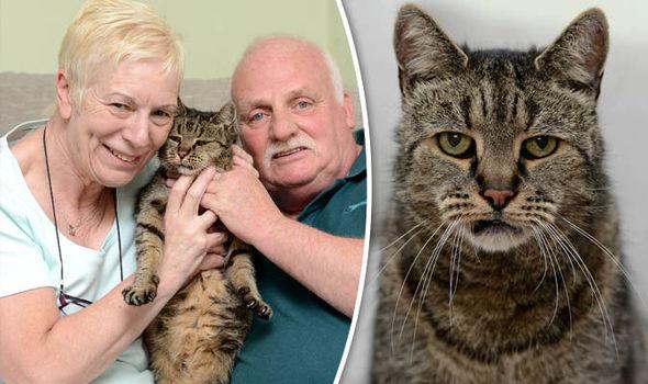 """Cụ mèo già nhất thế giới """"141 tuổi"""" - 1"""