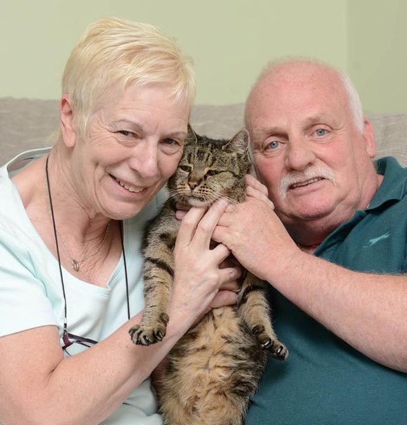 """Cụ mèo già nhất thế giới """"141 tuổi"""" - 3"""