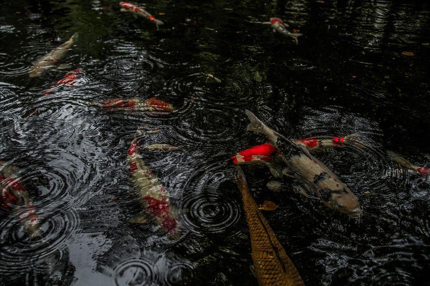 Mùa mưa Nhật Bản đẹp tựa tranh vẽ - 10