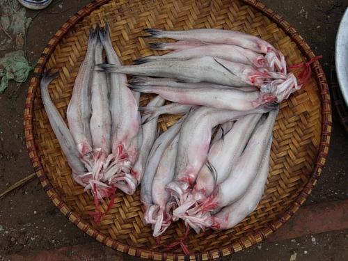 """Thực hư cá Khoai ướp bằng """"thần dược"""" bảo quản hoa quả? - 3"""