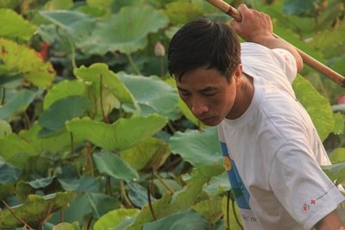 Trà cổ Hà Nội 7 triệu đồng/kg ướp từ 1200 bông hoa sen - 4