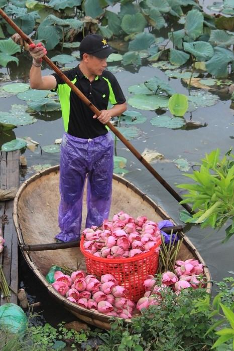 Trà cổ Hà Nội 7 triệu đồng/kg ướp từ 1200 bông hoa sen - 7