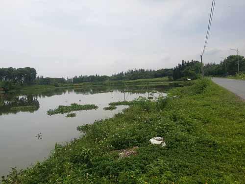 """Cận cảnh cá sấu """"khủng"""" bắt được ở hồ câu nổi tiếng Hà Nội - 1"""