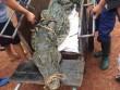 """Cận cảnh cá sấu """"khủng"""" bắt được ở hồ câu nổi tiếng Hà Nội"""