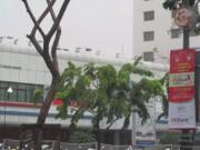 Tin tức trong ngày - TPHCM: Nhóm người bí ẩn cắt trụi hàng cây ở đường Trường Sơn