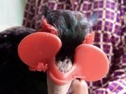 """Tài chính - Bất động sản - Nuôi con tiền tỷ: Đeo kính cho loài chim """"đẻ"""" lãi như """"máy in tiền"""""""