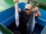 Thị trường - Tiêu dùng - Ngư dân Hà Tĩnh trúng đậm mẻ cá thu giá gần 400 triệu đồng
