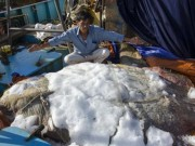 Tin tức trong ngày - Bắt được cá lạ hình thù kỳ quái nặng 600kg
